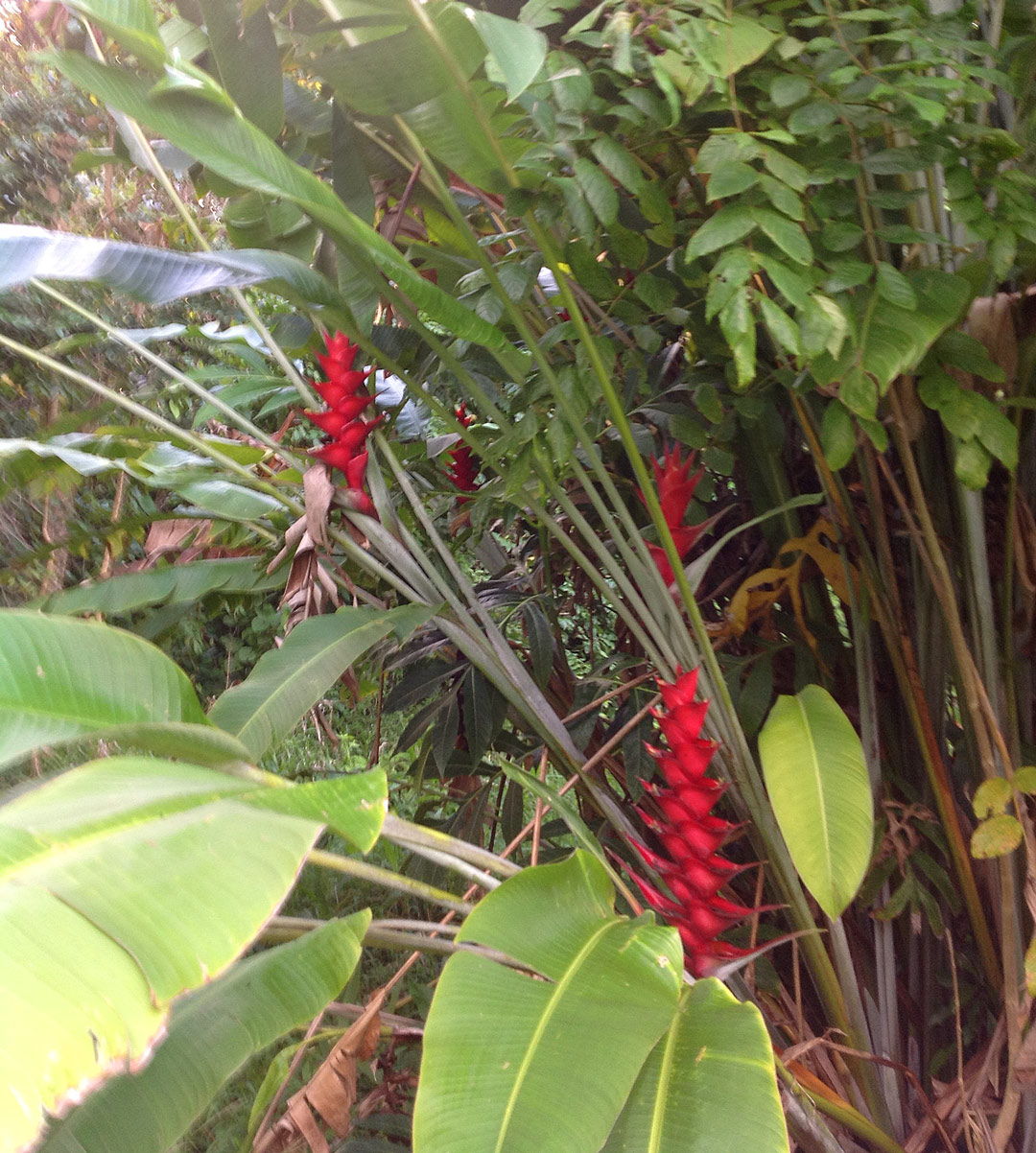 Red Cheveron Flowers